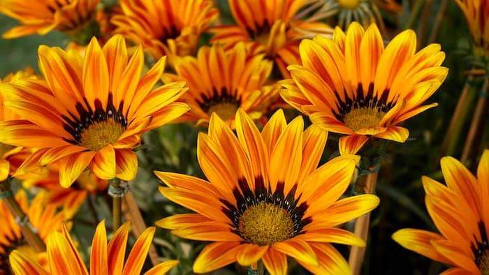 Uplifting image: beautiful orange flowers